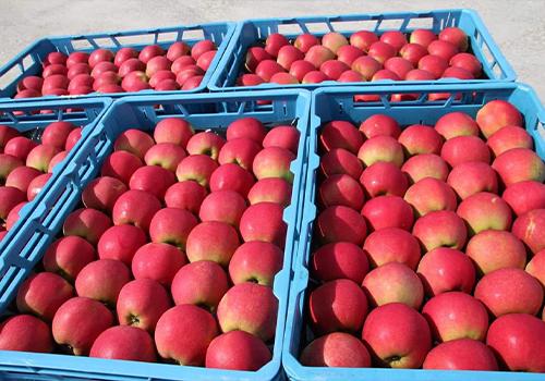 Appels_verkoop